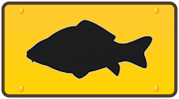 Le requin en dauphin - La carpe